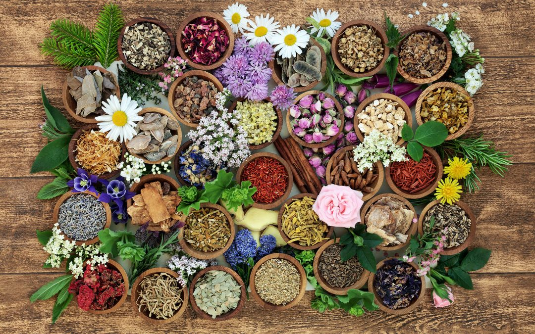Collect medicinal herbs