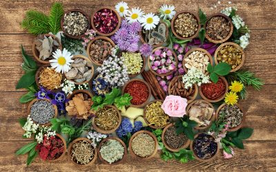 Collect medicinal herbs
